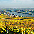 Vineyards Near A Town, Rudesheim by Panoramic Images