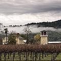 Vineyards Of Napa by Carol M Highsmith