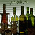 Viniculture  by Lee Owenby