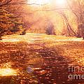 Vintage Autumn Path by Rachel Duchesne
