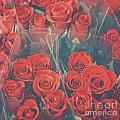 Vintage Background Of Roses In Bouquet by Aleksandar Mijatovic