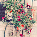 Vintage Bicycle Flowers Photograph by Elle Moss