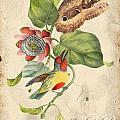 Vintage Bird Study-b by Jean Plout