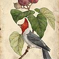 Vintage Bird Study-d by Jean Plout