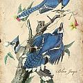 Vintage Bird Study-f by Jean Plout