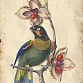 Vintage Bird Study-g by Jean Plout