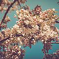 Vintage Blossom by Brenna Schelle