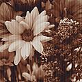 Vintage Bouquet by Dan Sproul