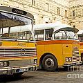 Vintage British Buses In Valetta Malta by Jacek Malipan
