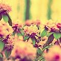 Vintage Bumblebee's Bush by Yevgeni Kacnelson