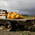 Vintage Dodge Brothers Pumpkin Truck With Two Trees Ventura by David Millenheft