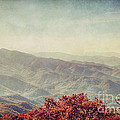 Vintage Fall by Emily Kay