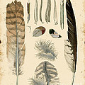 Vintage Feather Study-a by Jean Plout