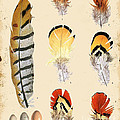 Vintage Feather Study-d by Jean Plout