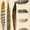 Vintage Feather Study-jp2085 by Jean Plout