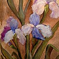 Vintage Iris by Sherry Harradence