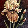 Vintage Iris by VLee Watson
