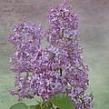 Vintage Lilacs by Mel Hensley