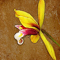 Vintage Orchid by Judi Bagwell