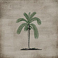 Vintage Palm Tree by P S