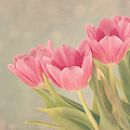 Vintage Pink Tulips by Kim Hojnacki