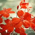 Vintage Red Flowers by Jackie Farnsworth