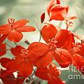 Vintage Red Flowers by Jackie Farnsworth