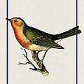 Vintage Robin Vertical by Elaine Plesser