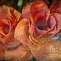 Vintage Roses by Judy Palkimas