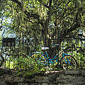 Vintage Schwinn And Ancient Live Oak by Kathy Clark