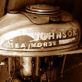Vintage Sea Horse by David Lee Thompson