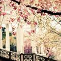 Grecian Garden by Jessica Jenney