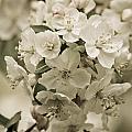 Vintage Spring by Julie Andel
