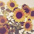 Vintage Sunflowers In The Garden by Elle Moss