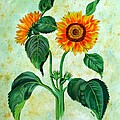 Vintage Sunflowers by Taiche Acrylic Art