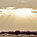 Vintage Sunshine by Glenda Graham