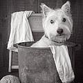Vintage Wash Day by Edward Fielding