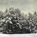 Vintage Winter by Karin Pinkham