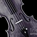 Viola Violin Photograph Strings Bridge In Sepia 3263.01 by M K  Miller
