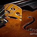 Viola Violin String Bridge Close In Color 3076.02 by M K Miller