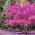 Violet Autumn by Curtis Stein