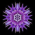 Violet Chrysanthemum Iv Flower Mandala by David J Bookbinder