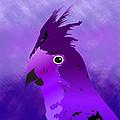 Violet Cockatiel by Lauren Baker