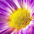 Violet Flower Macro by Bruce Nutting