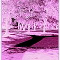 Violet Illusion by Bobbee Rickard