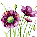 Violet Poppies by Annie Troe