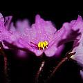 Violet Prayers by Lisa Knechtel