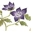 Violet by Tis Art