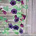 Violet Vine - Photopower 324 by Pamela Critchlow