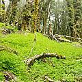 Virgin Mountain Rainforest Of Marlborough Nz by Stephan Pietzko